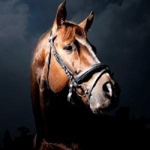 Открытки с Днём Рождения с лошадьми