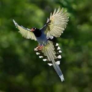 Открытки с Днём Рождения с птицами