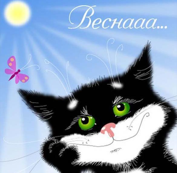 Открытка на 1 марта день кошек