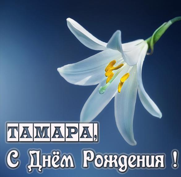 Бесплатная открытка с днем рождения женщине Тамаре