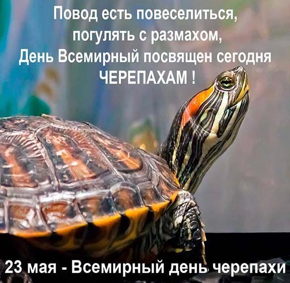 Прикольная картинка на день черепахи