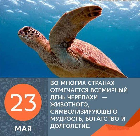 Картинка на день черепахи с цитатами