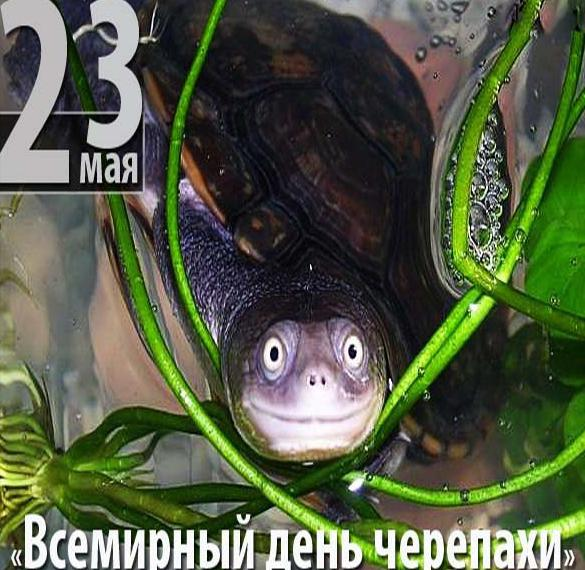 Картинка на день черепахи