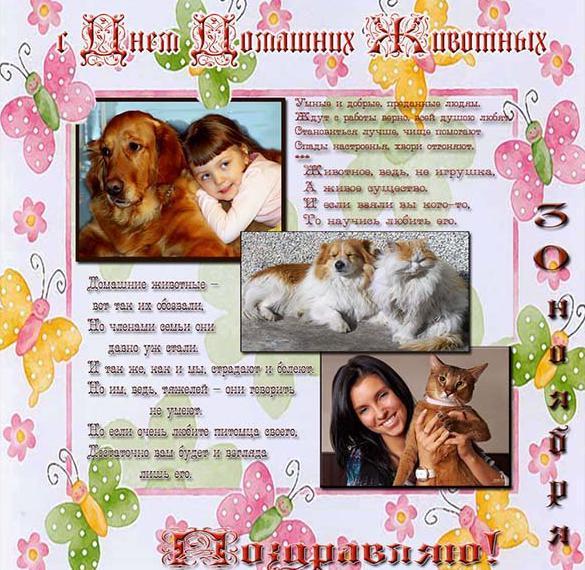 Картинка на день домашних животных 30 ноября