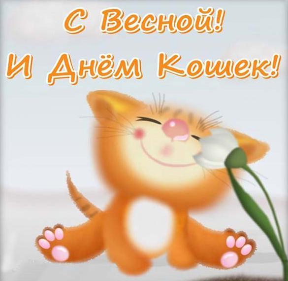 Картинка на день кошек 1 марта