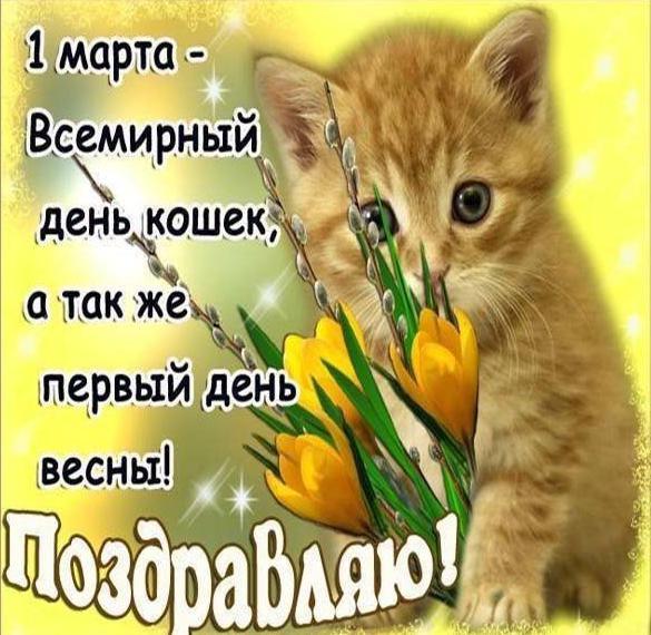 Открытка на день кошек 1 марта с поздравлением