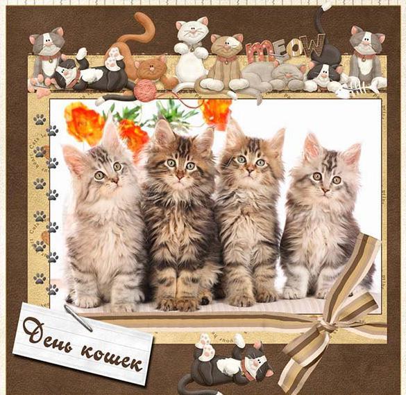 Картинка на день кошек 8 августа