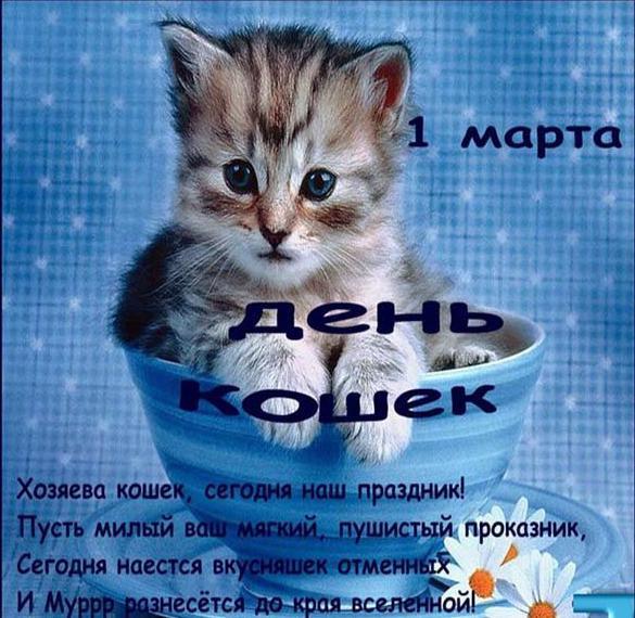Фото картинка на день кошек