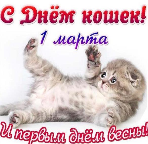 Красивая картинка на день кошек