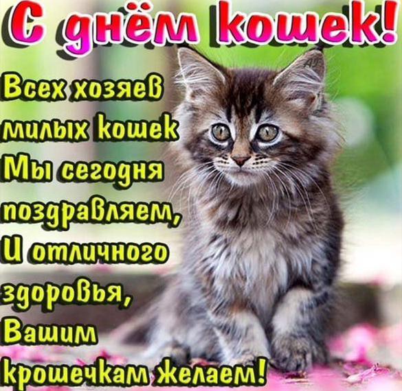 Картинка на международный день кошек