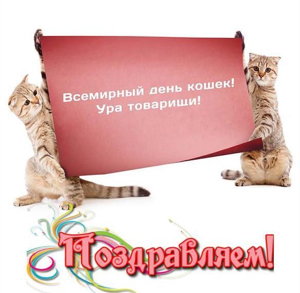 Прикольная картинка на день кошек
