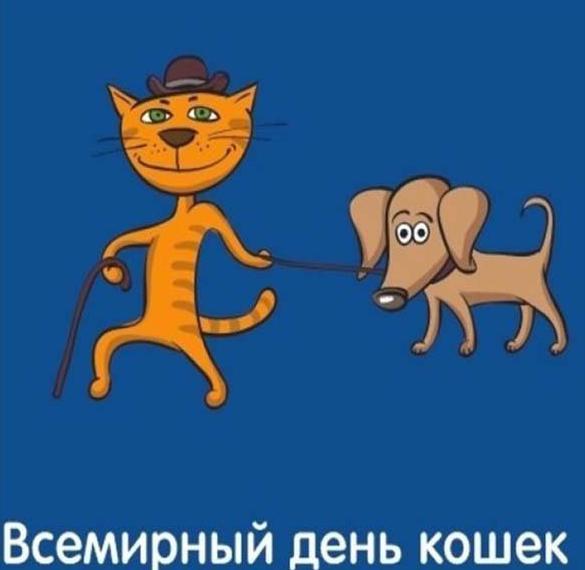 Смешная картинка на день кошек