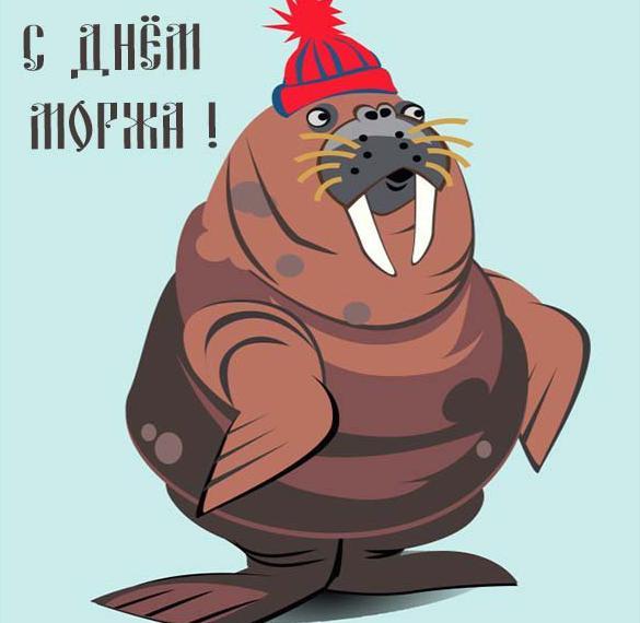Картинка на день моржа
