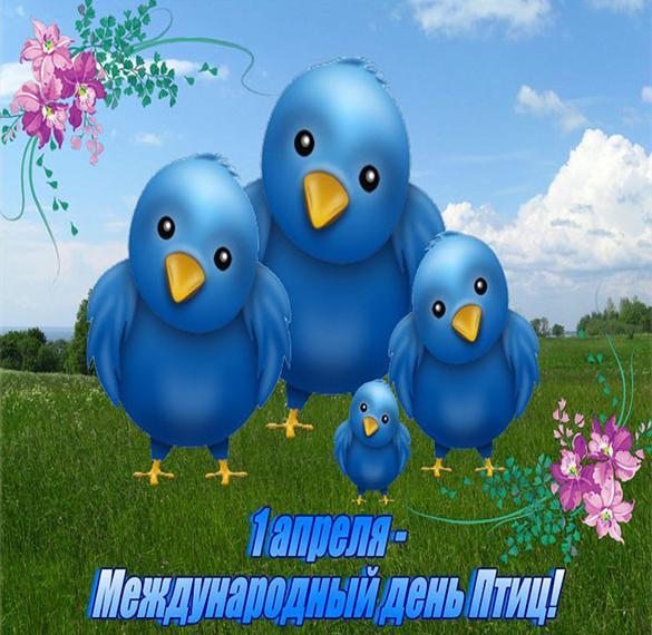 Картинка на день птиц для детей
