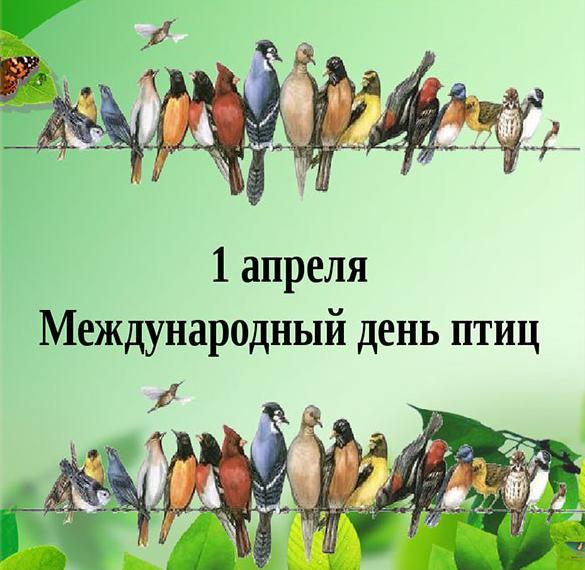 Картинка на день птиц