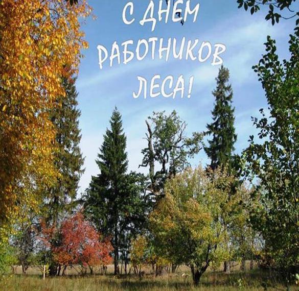 Фото картинка на день работников леса