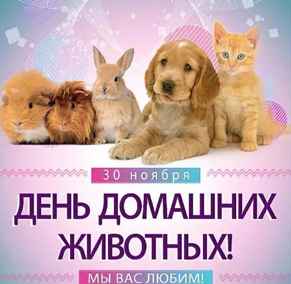 Картинка на день защиты домашних животных 30 ноября