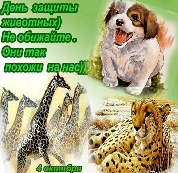 Картинка на день защиты животных 4 октября