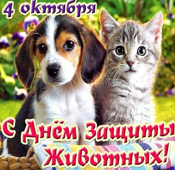 Красивая картинка на день защиты животных