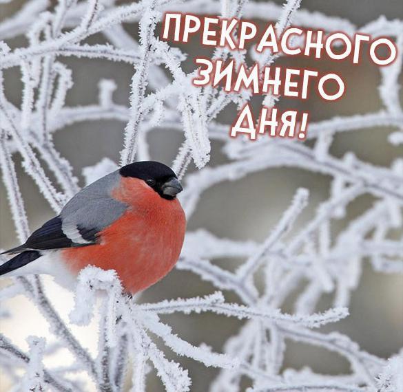 Фото прекрасного зимнего дня