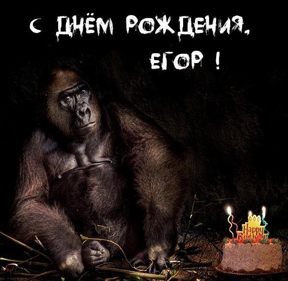 Прикольное фото с днем рождения Егор
