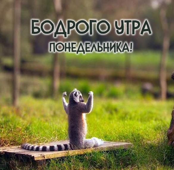Картинка бодрого утра понедельника прикольная