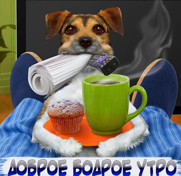 Картинка доброе бодрое утро прикольная с животными