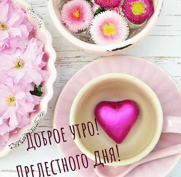 Картинка доброе утро хорошего дня нежная