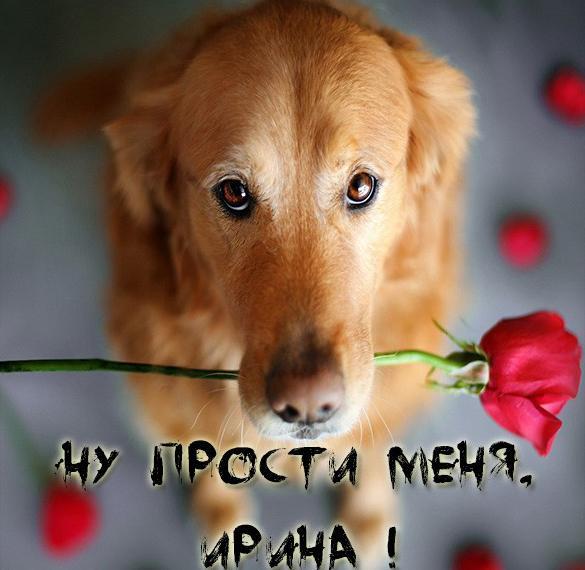 Картинка Ирина прости меня