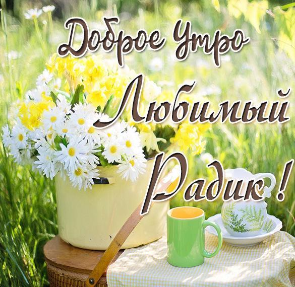 Картинка любимый Радик доброе утро
