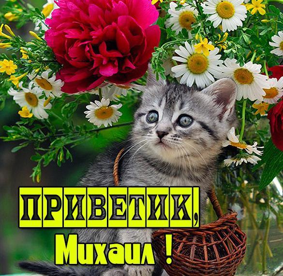 Картинка Михаил приветик
