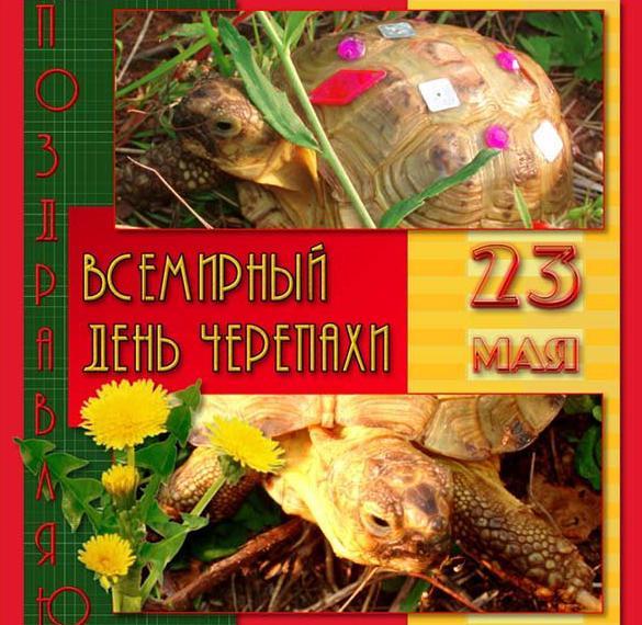 Картинка с поздравлением с днем черепахи