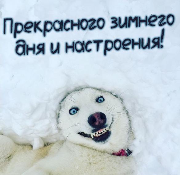 Картинка прекрасного зимнего дня и настроения