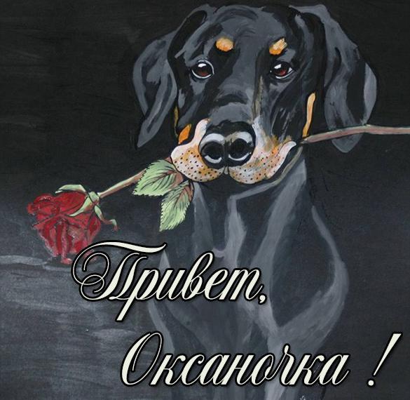 Картинка привет Оксаночка