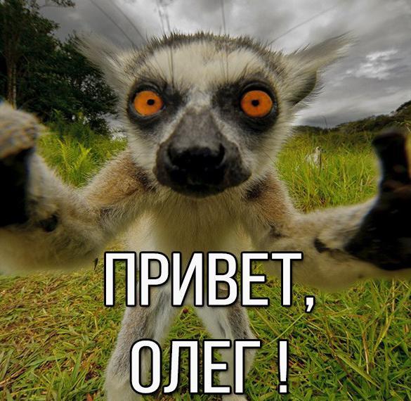 Картинка привет Олег