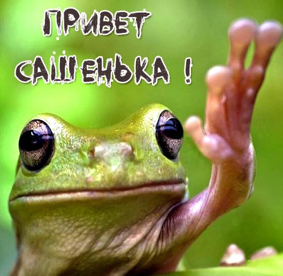 Картинка привет Сашенька