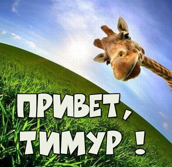Картинка привет Тимур