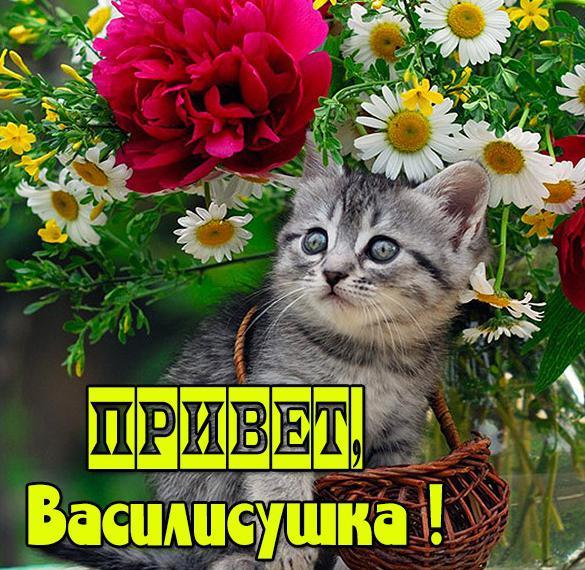 Картинка привет Василисушка