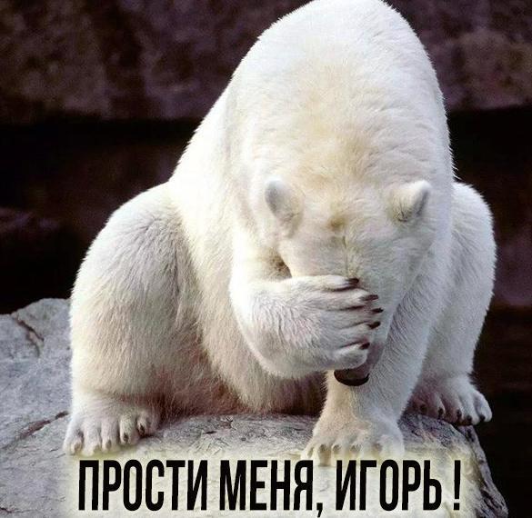 Картинка прости меня Игорь