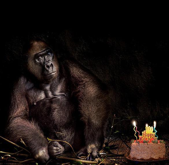Картинка с днем рождения без слов