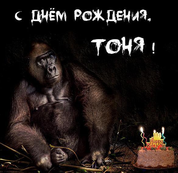 Прикольная картинка с днем рождения для Тони