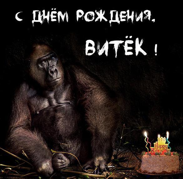 Прикольная картинка с днем рождения Витек