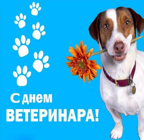 Картинка с днем ветеринара