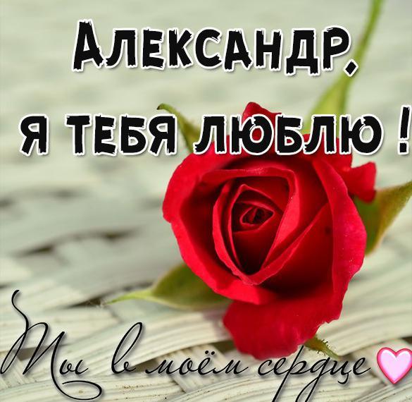 Картинка с надписью Александр я тебя люблю