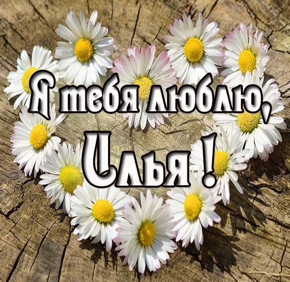 Картинка с надписью Илья я тебя люблю