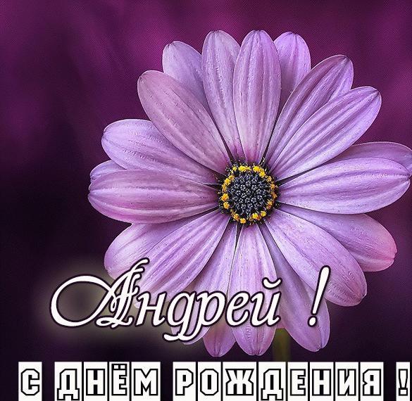 Картинка счастливого дня рождения Андрей