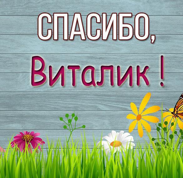 Картинка спасибо Виталик