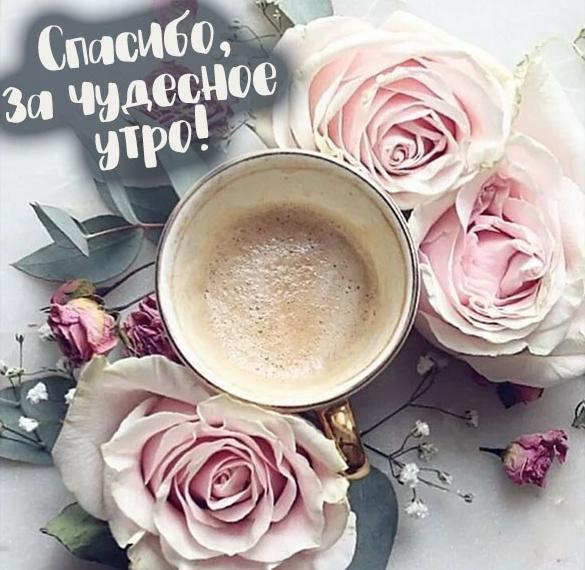 Картинка спасибо за чудесное утро