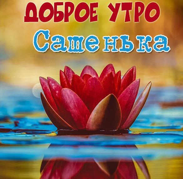 Красивая картинка доброе утро Сашенька
