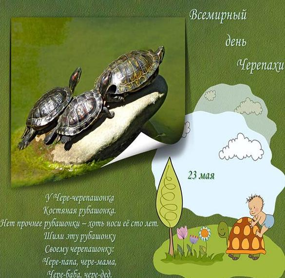 Красивая открытка с днем черепахи